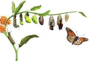 osebna-rast-svetovanje-coaching-eva-debevec-evisense-joga-ljubljana-terapija-stres